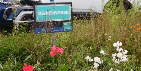 Bienenwiese Best Carwash 2